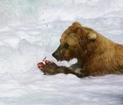z grizzly katmai1
